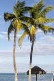 Bahamas, Cable Beach. Bahamas, the golden sands of Cable Beach stock image