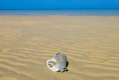 Bahamas setzen und Shells auf den Strand Lizenzfreie Stockfotos