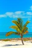 Bahamas-Strand- und Palme Lizenzfreies Stockfoto
