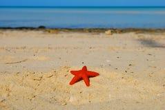 Bahamas-Strand und Stern Stockfotos