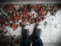 Bahar schoenen sonbahar zoon Stock Foto's