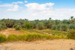 Bahariya Egypt Fotografia Stock