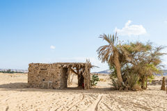 Bahariya oas egypt Royaltyfri Bild