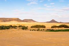 Bahariya Oasis. Egypt Stock Image