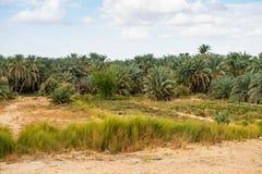 Bahariya Oasis. Egypt Stock Images