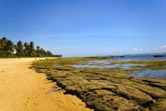 Bahia. Praia do Forte - Bahia - Northeast of Brazil royalty free stock image