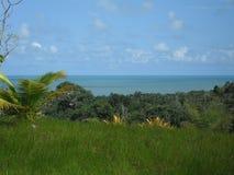 Bahia Brazil. Sky green nature clouds palm royalty free stock photos
