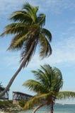 Bahia Honda Palms imágenes de archivo libres de regalías