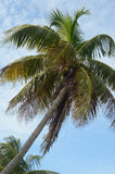 Bahia Honda Palms 2 stock foto