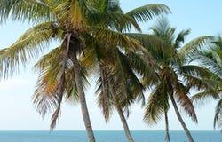 Bahia Honda Palms 3 fotografía de archivo