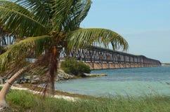 Bahia Honda Palms 4 foto de archivo