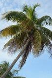 Bahia Honda Palms 2 stock photo
