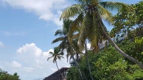 Bahia Honda Stat Park royaltyfria foton
