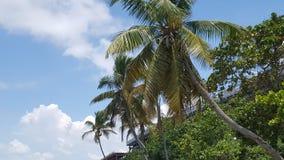 Bahia Honda Stat Park arkivbild
