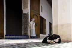 Bahia Palace in Marrakech. Sleeping cat at Bahia Palace in Marrakech Royalty Free Stock Images