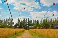 Bahn auf dem Reisgebiet mit blauem Himmel Stockfoto