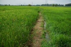 Bahn auf einem Reisfeld Stockbild
