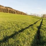 Bahn des Traktors auf dem grünen Gras Lizenzfreie Stockbilder