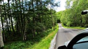 Bahn durch das Forrest stockfoto