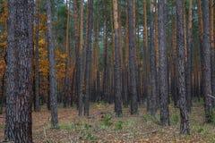 Bahn durch den Herbstwald Stockbilder