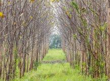 Bahn durch den nebelhaften Herbstwald am nebeligen Tag Lizenzfreie Stockbilder