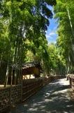 Bahn durch die Bambuswaldung von Kyoto Japan Stockfotos