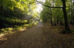 Bahn durch die Herbstbäume Lizenzfreies Stockfoto