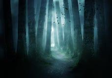 Bahn durch einen dunklen Wald lizenzfreie stockbilder