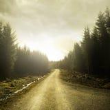 Bahn durch einen Wald Lizenzfreie Stockfotos