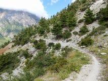 Bahn durch Kiefernwald lizenzfreie stockfotografie