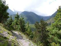 Bahn durch Kiefernwald lizenzfreie stockbilder