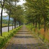 Bahn durch landwirtschaftliche Straße lizenzfreie stockfotografie