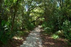 Bahn durch subtropischen Wald Stockbild