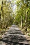 Bahn durch szenischen Wald Lizenzfreie Stockfotografie