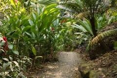 Bahn durch tropischen Dschungel stockbilder