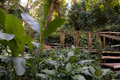 Bahn durch tropischen Dschungel Lizenzfreie Stockfotografie
