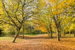 Bahn in einer lokalen Park Herbstzeit Stockbild