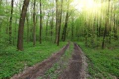 Bahn im grünen Wald Lizenzfreie Stockfotografie