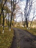 Bahn im Herbstpark Stockfotografie