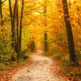 Bahn im Herbstwald Stockfotografie