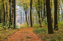 Bahn im Herbstwald lizenzfreie stockbilder