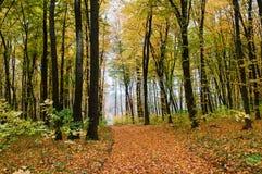 Bahn im Herbstwald lizenzfreie stockfotografie