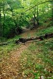 Bahn im Wald Stockfotos
