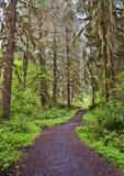 Bahn im Wald mit hohen Bäumen Stockbilder