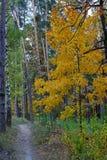 Bahn im Wald und im Herbstahorn Stockbild