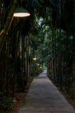 Bahn mit Bambussen auf der Seite Stockfotografie