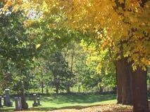 Bahn mit den gelben und grünen Ahornbäumen im Herbst in einem Kirchhof stock video footage