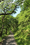 Bahn mit Fußweg durch Allee von Bäumen Lizenzfreie Stockfotos