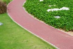 Bahn mit grünem Gras im Garten Stockfotografie