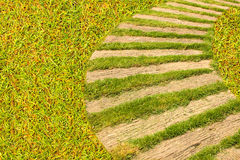 Bahn mit natürlichem grünem Gras Stockbilder